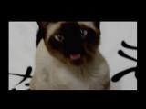 котейка поёт под музыку из игр пристолов