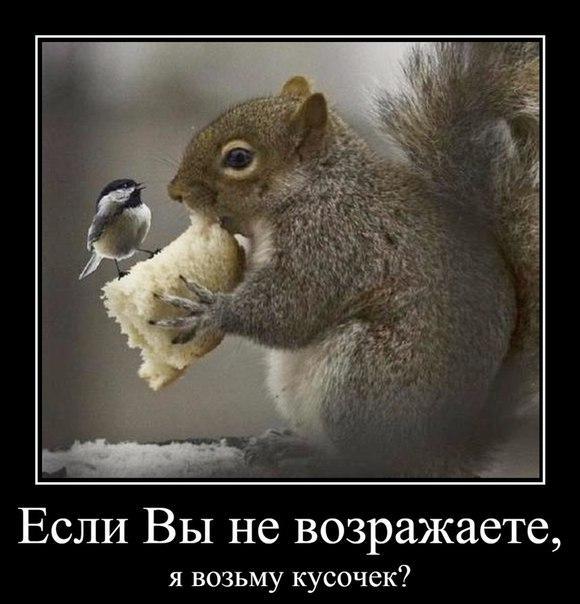 https://pp.vk.me/c629201/v629201474/3eb2b/fGso6mFm4D0.jpg
