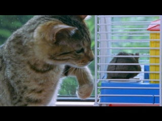 BBC: Загадочные кошки / The Cat Connection (2002)