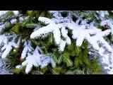 Зима.  Заснеженные Ели.  Зимние Елки в Снегу.  Футажи для видеомонтажа - YouTube