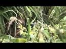 Снайпер 2 Тунгус. (Полная версия) Военные фильмы - L