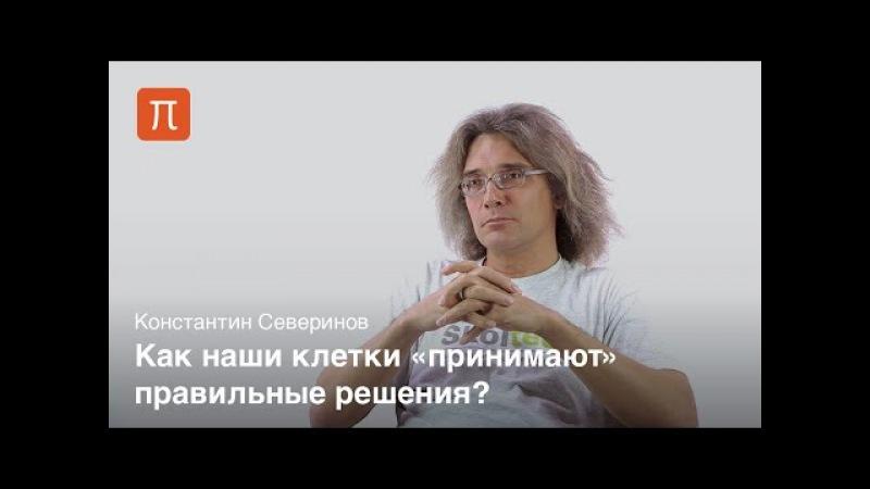 Передача биологических сигналов - Константин Северинов