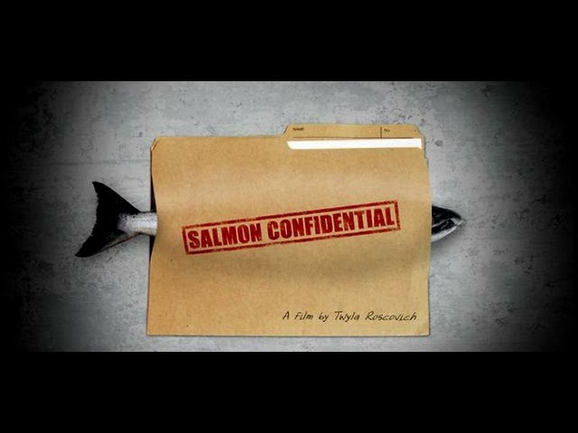 Salmon Confidential, Documentary About Salmon Farms in Canada Diseased Salmon