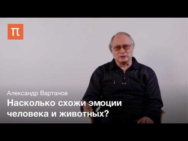 Эмоции и глоттогенез Александр Вартанов