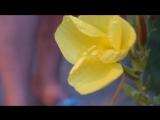 Цветок распускается за 30 секунд!
