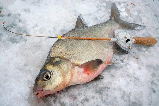 зимняя ловля язя