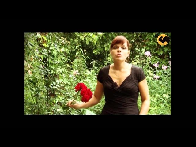 Розы в Саду. серия 30.Розы в полутени