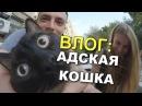 VLOG Адская кошка или Котик по вызову