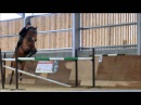 Ben Maher Jumping 1m50 Slow Motion