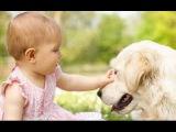 Милые дети играет с Лабрадора Собаки - Собаки люблю детей Компиляция HD ВИДЕО