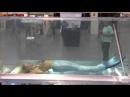 Работа русалкой в аквариуме | Mermaid Melissa | work mermaid in the aquarium
