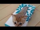 Жидкие коты