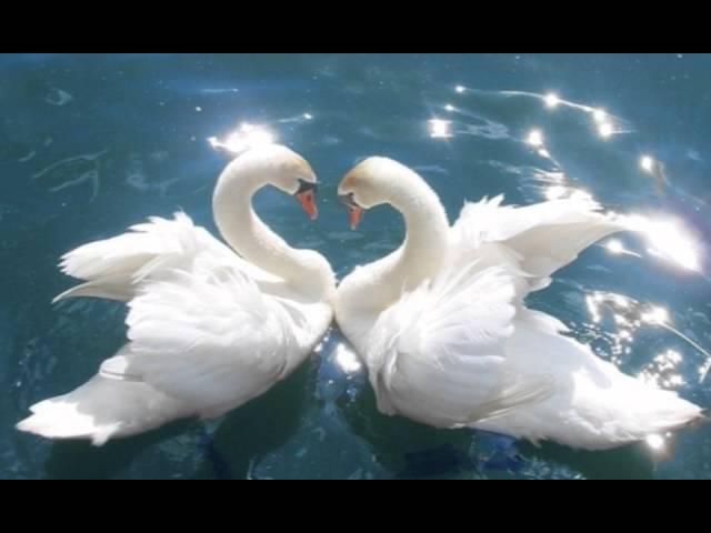 Вера и Любовь - основа Учения Владык Мудрости.