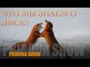 О наглой рыжей морде Лисы Дикая природа России PRIRODA SHOW