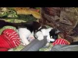 Морга, тренируется, пока не на кошках