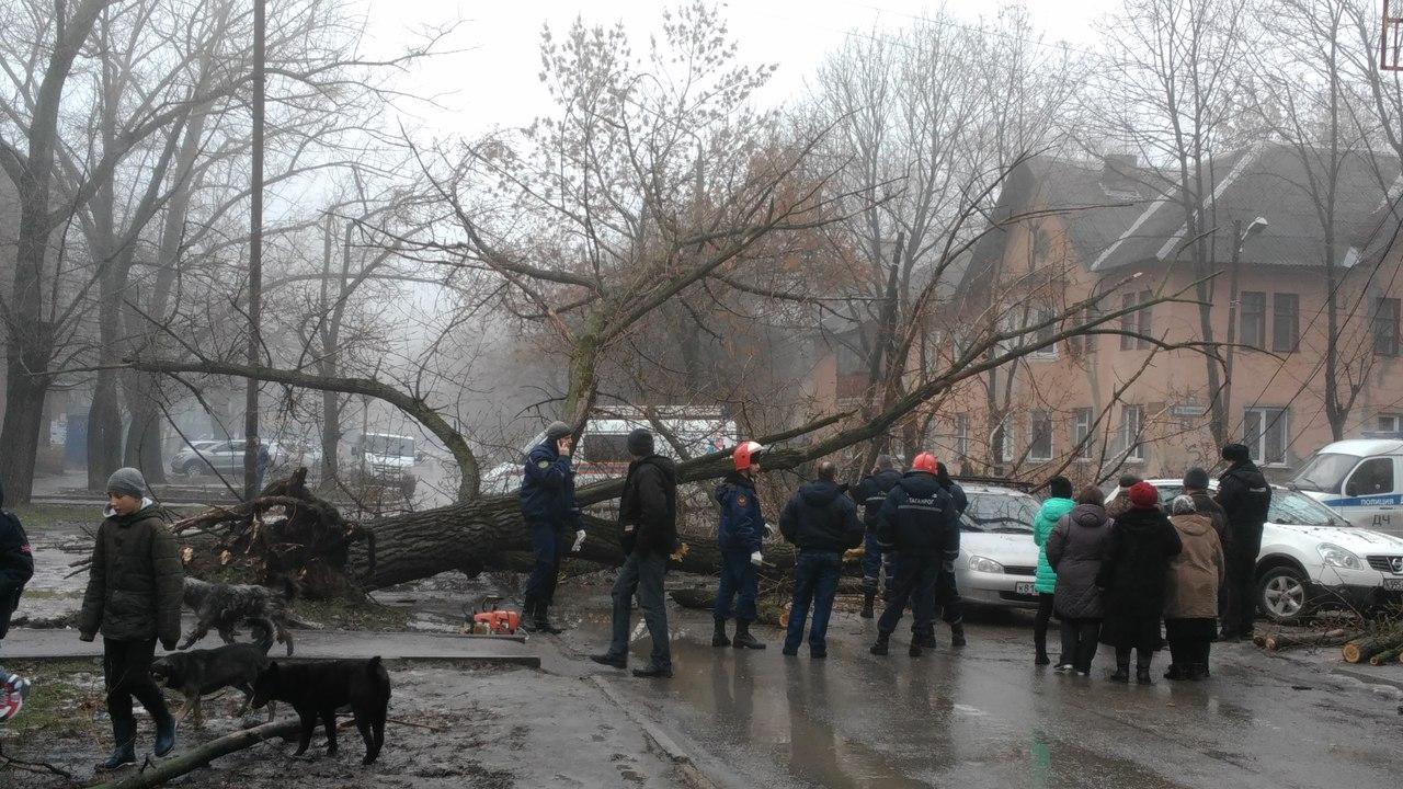 В Таганроге на улице Калинина многолетнее дерево упало на «Ладу Калину» и «Ниссан Кашкай»