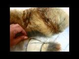 Жилет из лисы с кожаными вставками. Часть 10