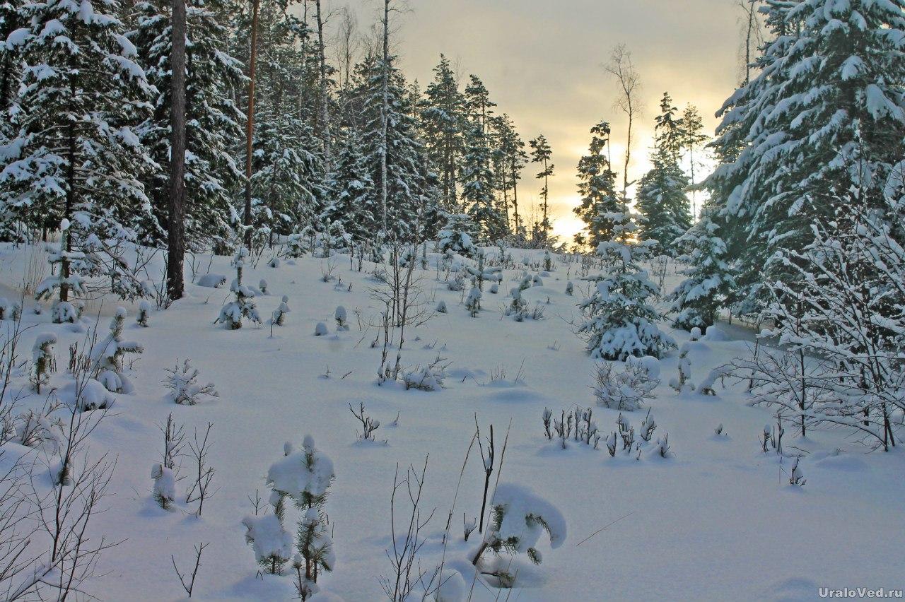 Зимний лес и солнце