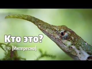 Это интересно 479: Что за зверь? Чудо природы