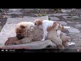 Amusing games puppies. ЗАБАВНЫЕ ИГРЫ ЩЕНКОВ.Одесса.