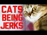 Cats Being Jerks Video Compilation (April 2015)