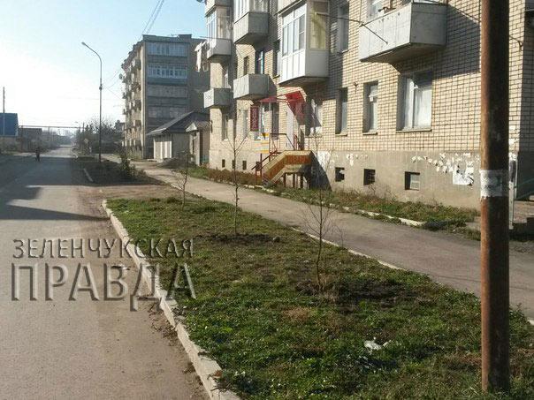 Жители станицы Зеленчукской высадили березовую аллею