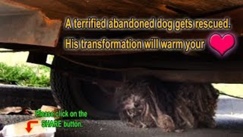 A terrified abandoned dog gets rescued. His transformation will warm your heart. Please share.