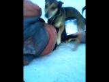 собака трахает мальчика