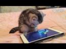 играть котик ловить рыбку