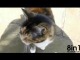 Кот мяукает очень глубоким басом