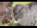 Все для животных Все о груминге кошек