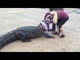 Гигантский аллигатор забрел в торговый центр