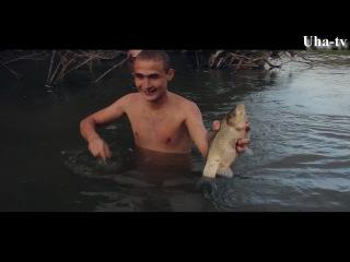 Ловля рыбы руками. Uha-tv