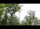 Валка дерева по частям