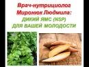 Миронюк Людмила ДИКИЙ ЯМС NSP - подарок от Природы и женщинам, и мужчинам