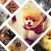 Интернет-журнал о породистых собаках