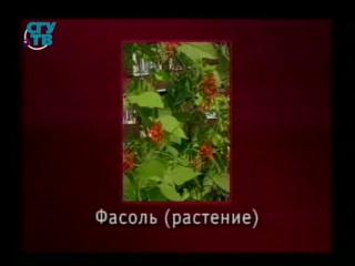 Пищевые растения. Урок 1.6. Зернобобовые и жирномасличные культуры