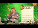 Целительница Софья Нагорняк - Лечебные свойства подорожника