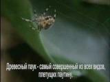 Пауки под наркотиками (Spiders on drugs)