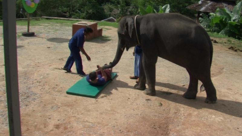 Слоновий массаж Манкаю.TOD