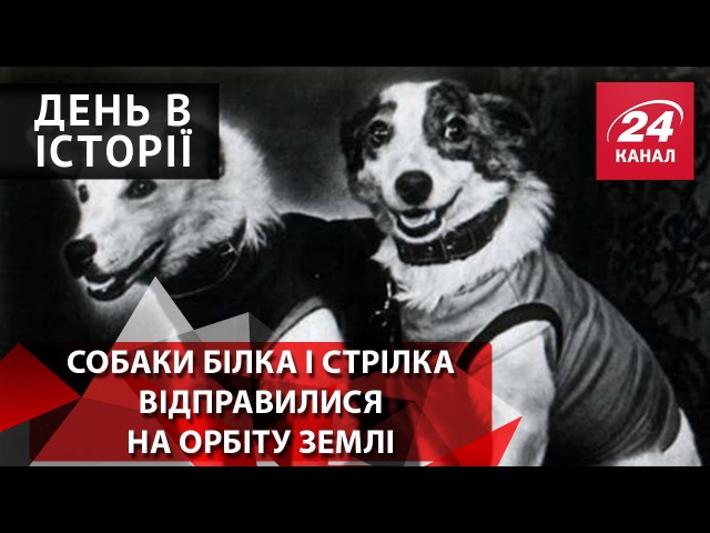 День в історії. Собаки Білка і Стрілка відправилися на орбіту Землі