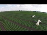 Уборка урожая огурцов на полях