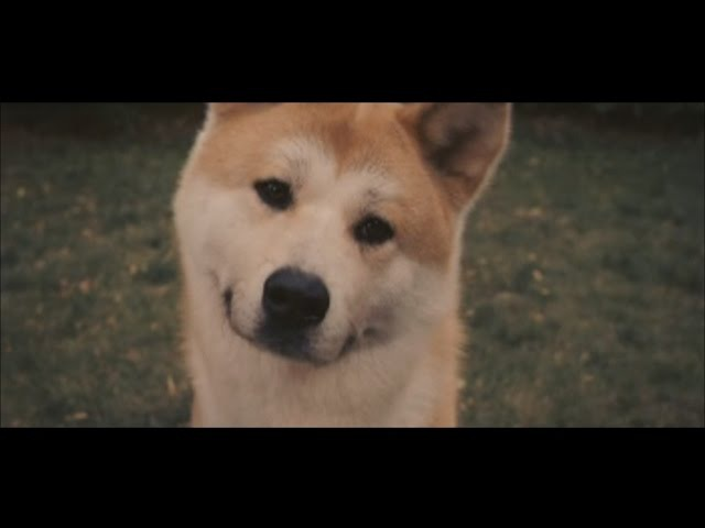 Хатико, такого вы еще не видели, самый красивый клип.