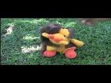 Забавный ленивец. Малыш ленивец, такой милый.