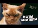 Самые смешные кошки 15 ∙ Приколы с животными 2015 ∙ Best Funny Cats Compilation · Part 15