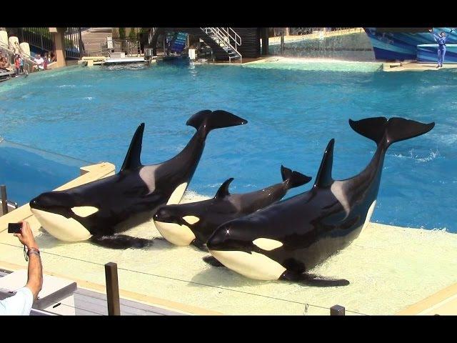 One Ocean Full Show SeaWorld San Diego 9 20 14