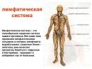 Значение лимфатической системы в восстановлении иммунитета.