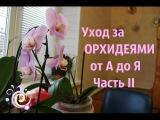 Уход за ОРХИДЕЯМИ от А до Я. Часть II.