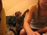 Кот просит ласки