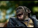 Лучшие приколы про животных Улетные животные Смешно до слез Смешное видео про животных